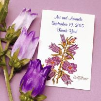 Canterbury Bell Seed Packet Favor