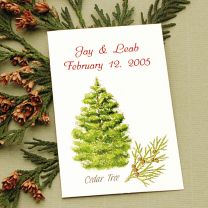 Cedar Tree Seed Packet Favor